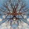 Pohon Randu Dekat Rumahku - Indah Salimin Ft Alya