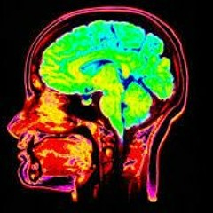 The Magical Mystery Tour Jan 8 2016 Joe Dispenza Neuroscience Psychoneuroimmunology