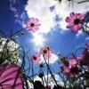 Download Joshua Radin - Beautiful Day  [ Deep House Original Mix ] Mp3