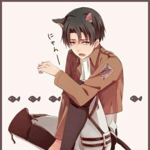 Love for me for once! (Neko!Levi x reader) short story by