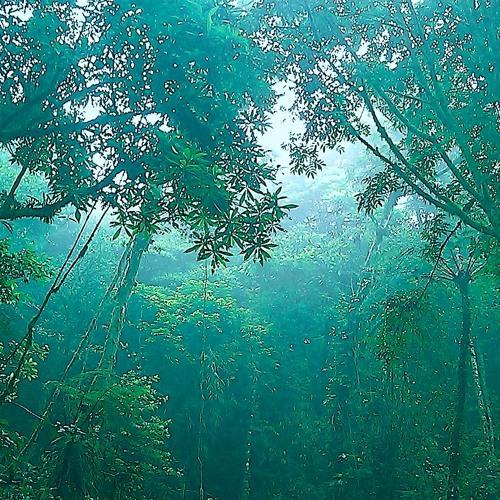 Jungle Concerto