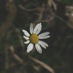 With You (Rain)