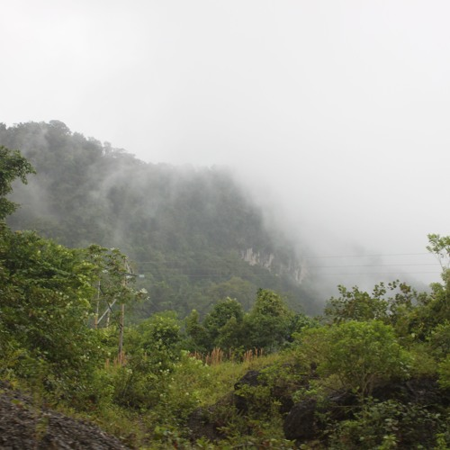 Why Is Conservation So Difficult - A Look At The Lacandon Jungle