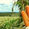 STJ confirma: BB deve devolver diferença do Plano Collor a agricultores