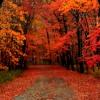 Jazz Violin - Autumn Leaves