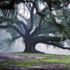 Giants In The Oak Tree (Soft Indie)
