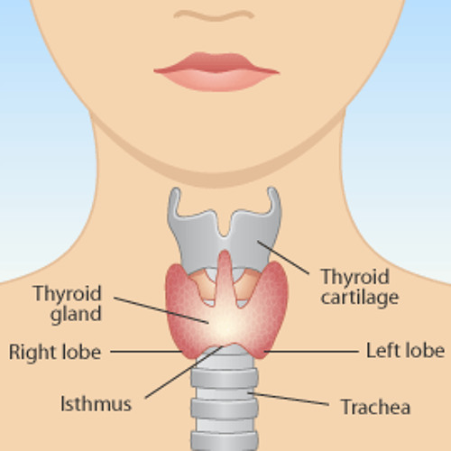 E 30: Secrets to Natural Thyroid Health & Weight Loss with Dr. Gil Kajiki