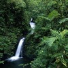 A Forest (Ron Van Den Beuken Remix Edit) - Blank & Jones