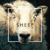 The Human Animal - Sheep - Instrumental