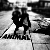 Fast Romantics - Animal