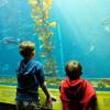 Kids' Q&A, part 4: Hear inquisitive second-graders question us about kelp!