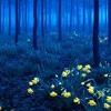 Mystic Forest (remix) - Soundscape by Willie Ellebie