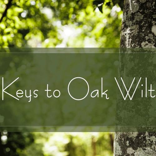 Keys to Oak Wilt