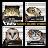 The Four Owls - Life In The Balance Feat. Jam Baxter