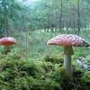 A Mushroom Affair