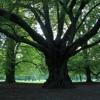 Alt wie ein Baum (in Style of Puhdys) *SU*