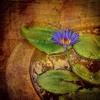 Meditação Inicial: Reconhecendo os Chakras e instigando o fluxo energético