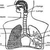Aparato Respiratorio. Tema 3. Javier Fernández Martín