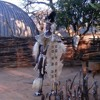 Zulu Chief's Intro And Welcome