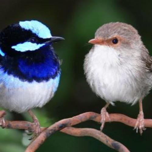 Deux Petites Oiseaux