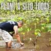 Ryan Hiraoka - Plant A Seed Today [ Reggae Hitz 2016 ] *** I Tunes ***