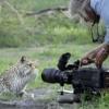 @relsantana Propone Algunas Ideas Para Un Canal De Documentales Y Telerrealidad