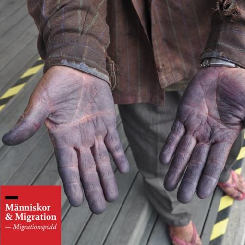 Skuldsatta arbetskraftsinvandrare - vem har plockat bären i frysdisken?
