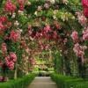 Rose Garden   2.14
