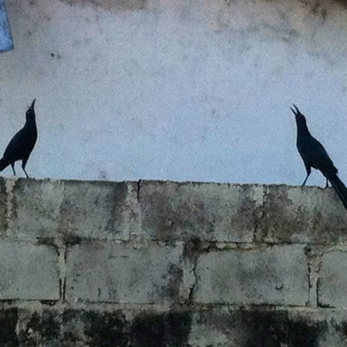 ...And Grackles Gone for Orchestra