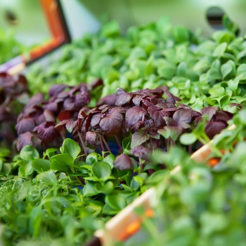 AgroEnlace: Perspectivas De La Agricultura 2015 - 2016 Parte 2. Febrero 17 2016