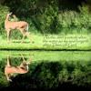 As The Deer Instrumental Cover