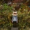 This Wild Life - Loose Ends (Real Friends Cover) mp3
