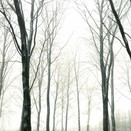 Kraftigt snöfall i bokskogen / Heavy snowfall in the beech forest