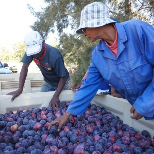 South Africa holding on to plum role in Europe
