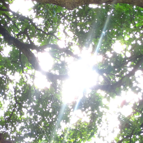 The Light Above The Leaves (2014)