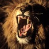 Roar Lyrics, music,performance Tom Vinelli