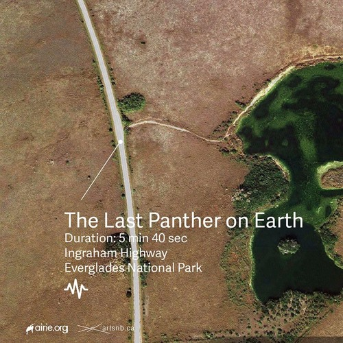 The Last Panther on Earth