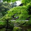 Zen Chill
