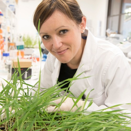 Barley Powdery Mildew Resistance - Will it happen to wheat?