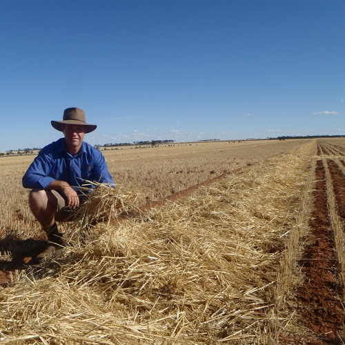 From weeds to disease - The need for diversity