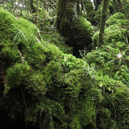 nature soundscape in Taipinshan, Taiwan