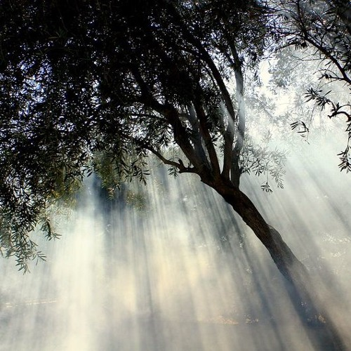 Light Above The Trees