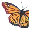 Butterfly - Raisa ft  Maruli Tampubolon (cover)