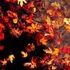 Last Leaf (Cover) - OK Go