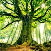 - Les Voix De La Forêt - ( original mix )