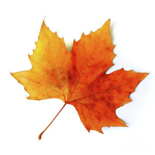 Three Sides to a Leaf