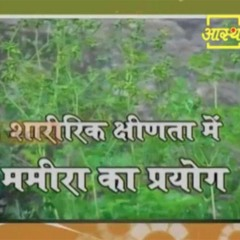 Ayurvedic use of  Gold Thread Root (Mamira) for Physical Weakness   Acharya Balkrishna