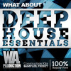 Deep House Essentials [10 Construction Kits, 380+ Drum Samples & Loops, Serum & Massive Presets]