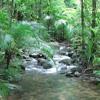 Rainforest | The Predators