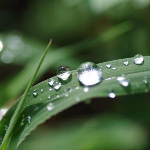 雨上がりの朝